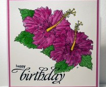 Free Hibiscus Image